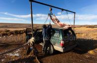Chargement de bétail dans La Pampa