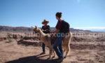 Caravane de lamas, Altiplano argentin