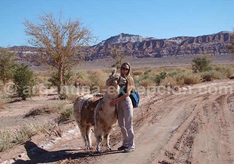 Promenade avec les lamas