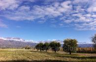 Mendoza and the wine route