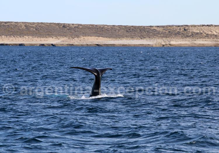 Hosteria del Nomade, Observation des baleines