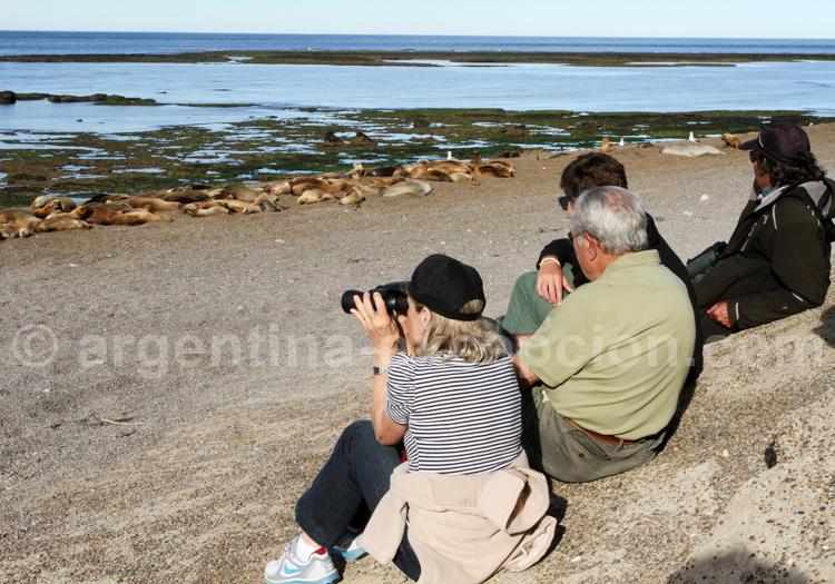 Estancia la Ernestina, Observation de la faune