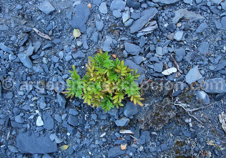 Végétation de Patagonie