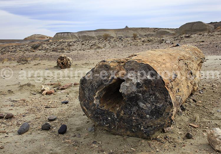 Bosque petrificado Sarmiento, Patagonia