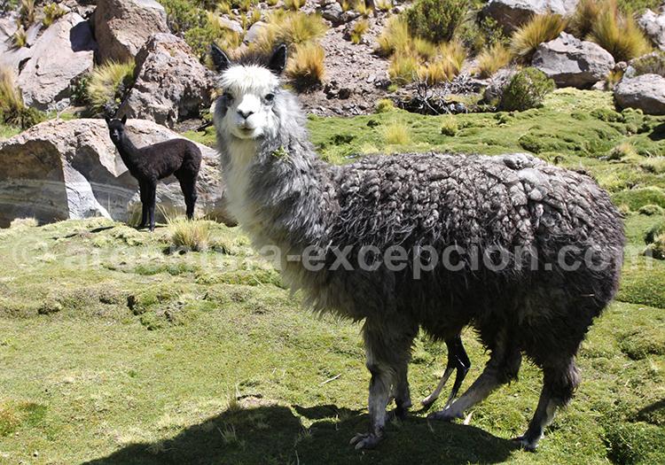 Andes du Nord, Argentine