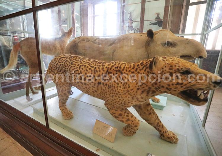 Musée des Sciences Naturelles de La Plata