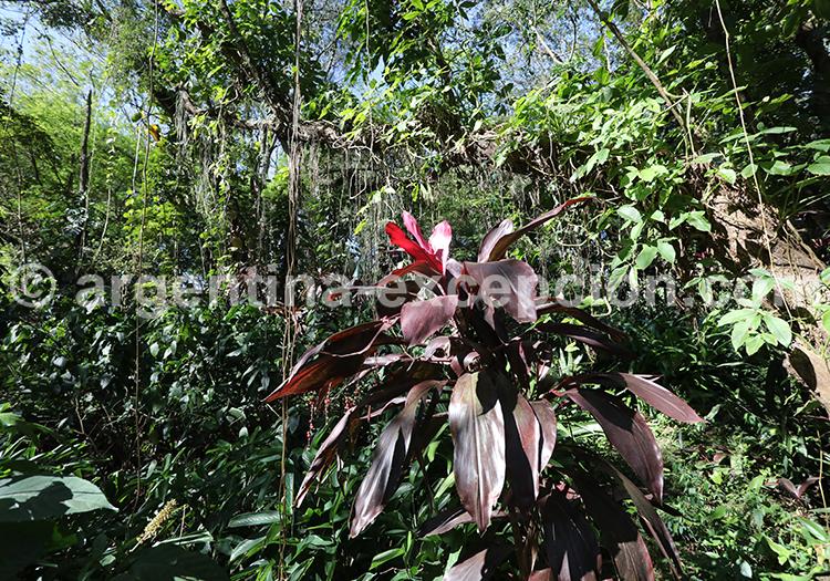 Forêt tropicale de Misiones