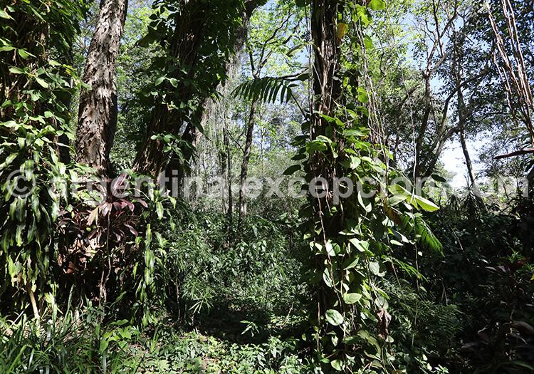 Randonnée en forêt, province de Misiones