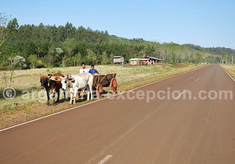 Province de Misiones, Argentine