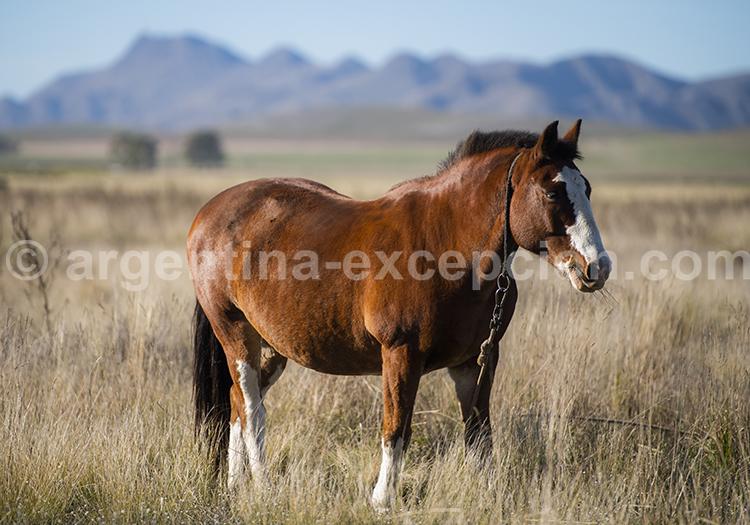 Un cheval dans les alentours de Piguë, province de Buenos Aires, Argentine avec l'agence de voyage Argentina Excepción