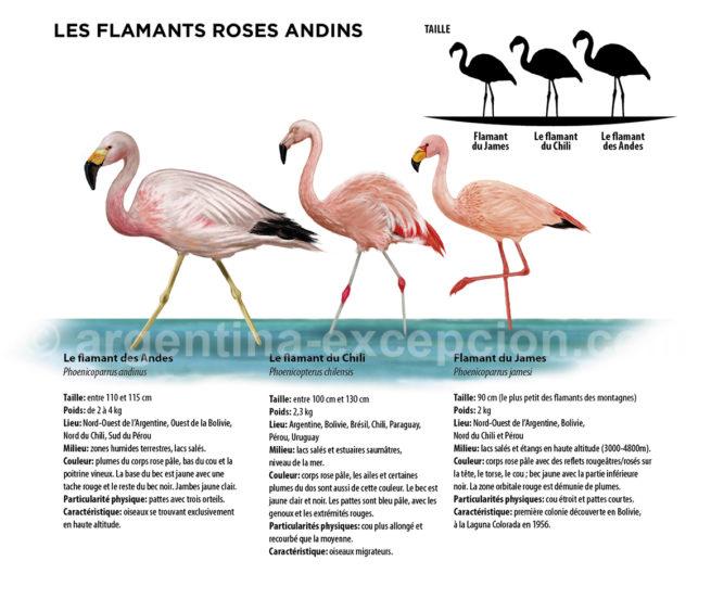 Infographie des flamants roses en Argentine avec Argentina Excepción