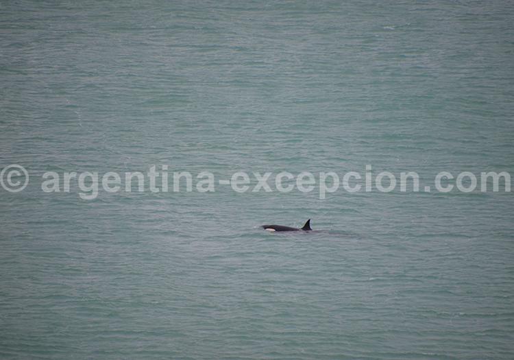 Orque Rincon Chico, Argentine avec Argentina Excepción