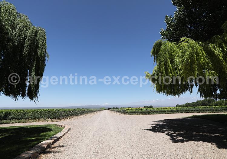 Voyage sur la route du vin, Argentine avec l'agence de voyage Argentina Excepción