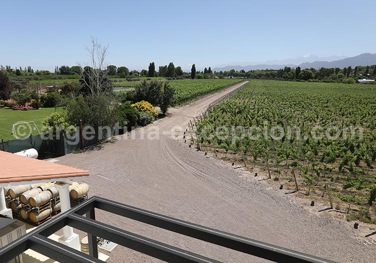 Visiter la région de Luján de Cuyo, Argentine avec l'agence de voyage Argentina Excepción