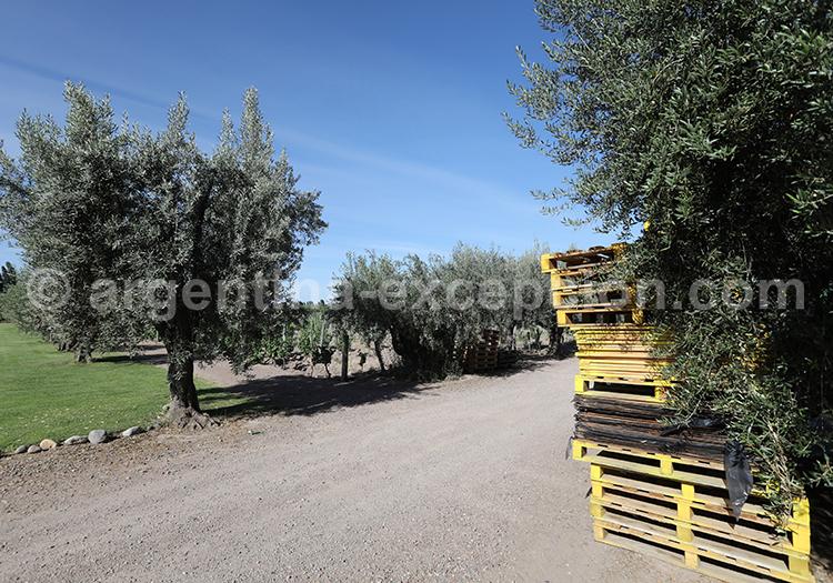 Le vignoble Vistalba, Luján de Cuyo, Mendoza avec l'agence de voyage Argentina Excepción
