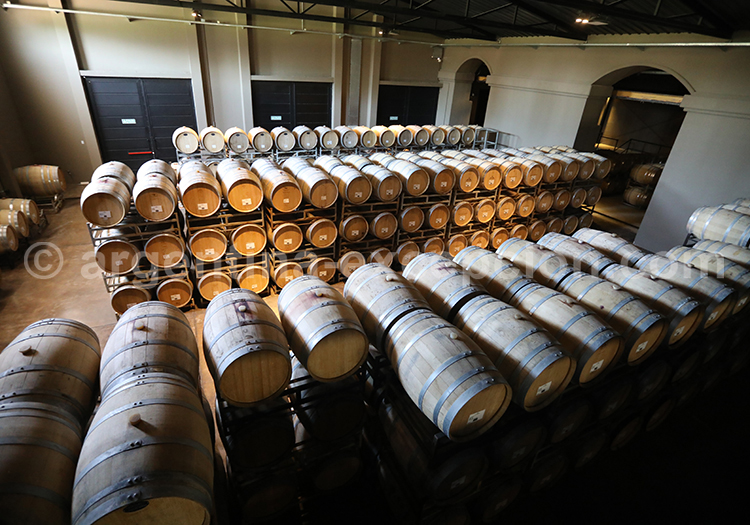 L'étape de la fermentation à la bodega Nieto Senetiner, Mendoza avec l'agence de voyage Argentina Excepción