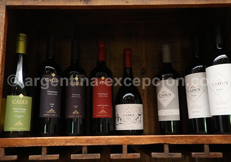 Mise en bouteille des vins de la bodega Nieto Senetiner, Mendoza avec l'agence de voyage Argentina Excepción