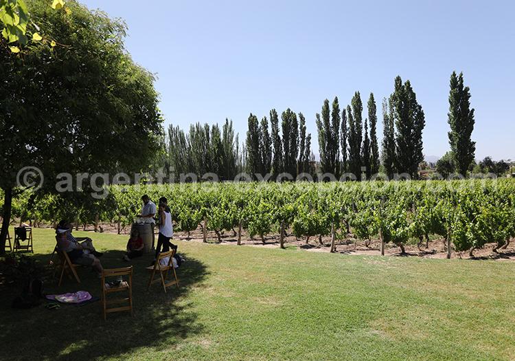 Les vignes de la bodega Nieto Senetiner, Luján de Cuyo, Mendoza avec l'agence de voyage Argentina Excepción