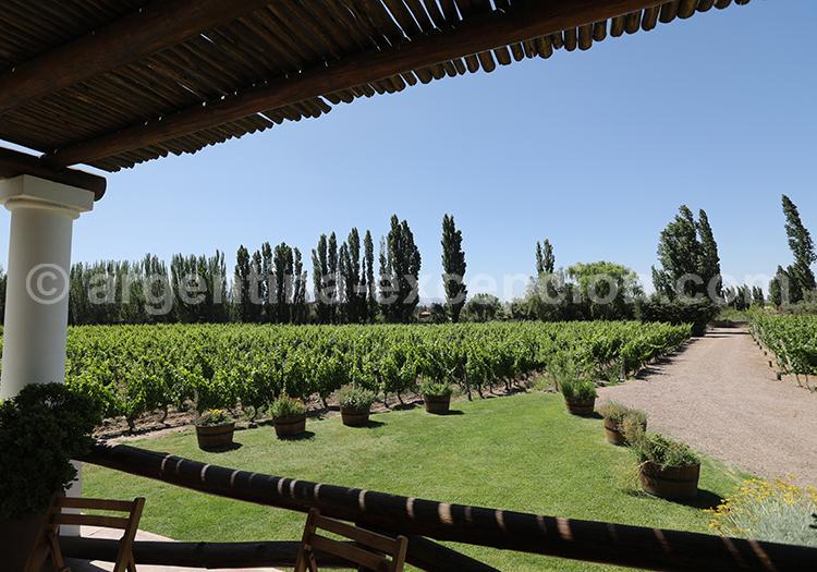 Dégustation de la cave de Nieto Senetiner, Luján de Cuyo avec l'agence de voyage Argentina Excepción