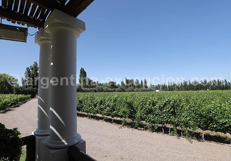Déguster les meilleurs vins de la bodega Nieto Senetiner avec l'agence de voyage Argentina Excepción