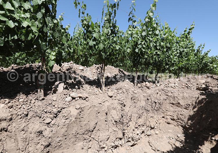 La route des vins en Argentine, Nieto Senetiner, Luján de Cuyo avec l'agence de voyage Argentina Excepción