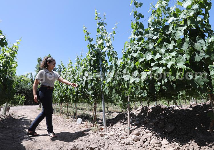 Partir faire la route des vins en Argentine, Nieto Senetiner, Luján de Cuyo, Mendoza avec l'agence de voyage Argentina Excepción