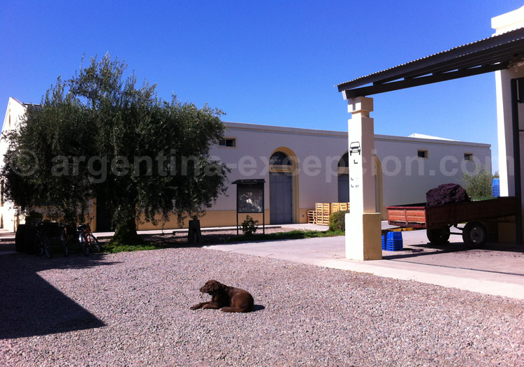 Visiter la bodega CarinaE, Maipú, Argentine avec l'agence de voyage Argentina Excepción