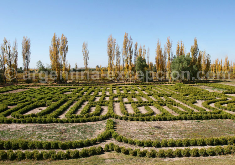 Visiter la bodega Finca los Alamos, San Rafael, Argentine avec l'agence de voyage Argentina Excepción