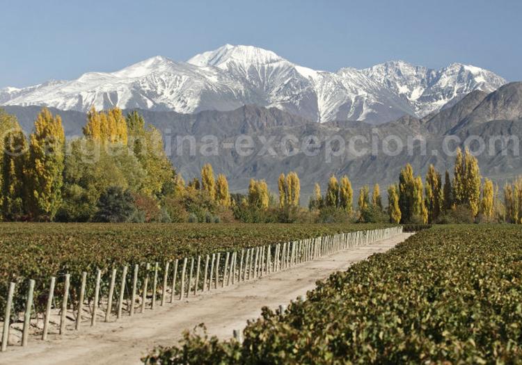 Visiter la bodega Terrazas Andes, Luján de Cuyo, Argentine
