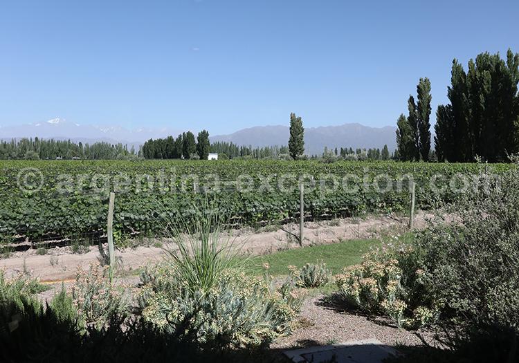 Dégustation de vins argentins, Luján de Cuyo, bodega Renacer avec l'agence de voyage Argentina Excepción