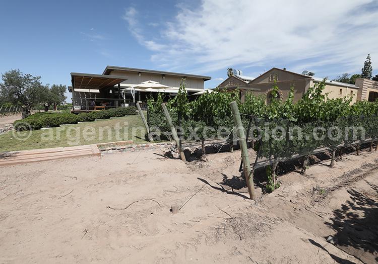 Visiter la bodega Casarena, Mendoza, Argentine avec l'agence de voyage Argentina Excepción