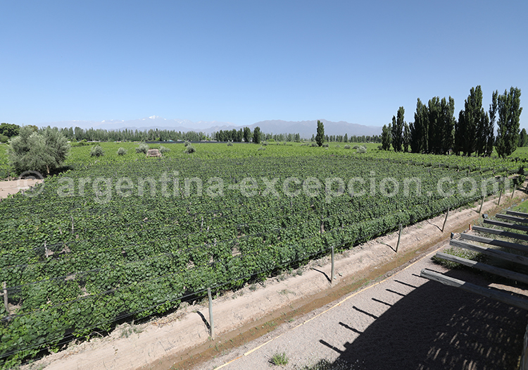 Dégustation de vin argentin, région de Mendoza avec l'agence de voyage Argentina Excepción