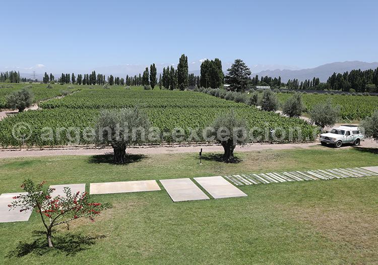 Bodega argentine, Matervini, vin argentin avec l'agence de voyage Argentina Excepción