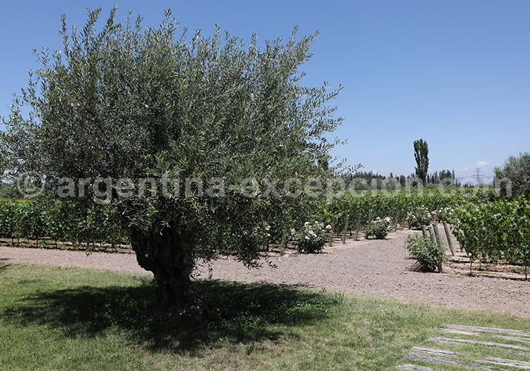 Partir à Mendoza et visiter la bodega Matervini avec l'agence de voyage Argentina Excepción