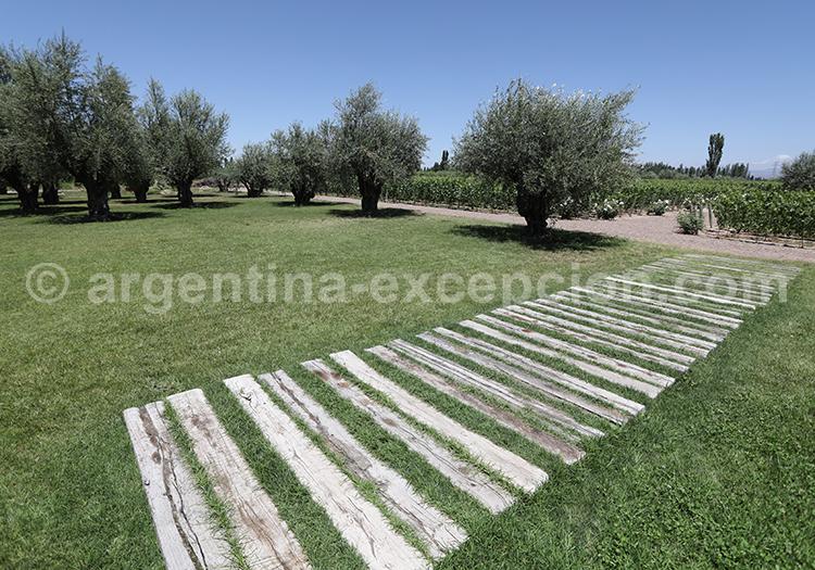 Oenotourisme de Mendoza, bodega Matervini avec l'agence de voyage Argentina Excepción
