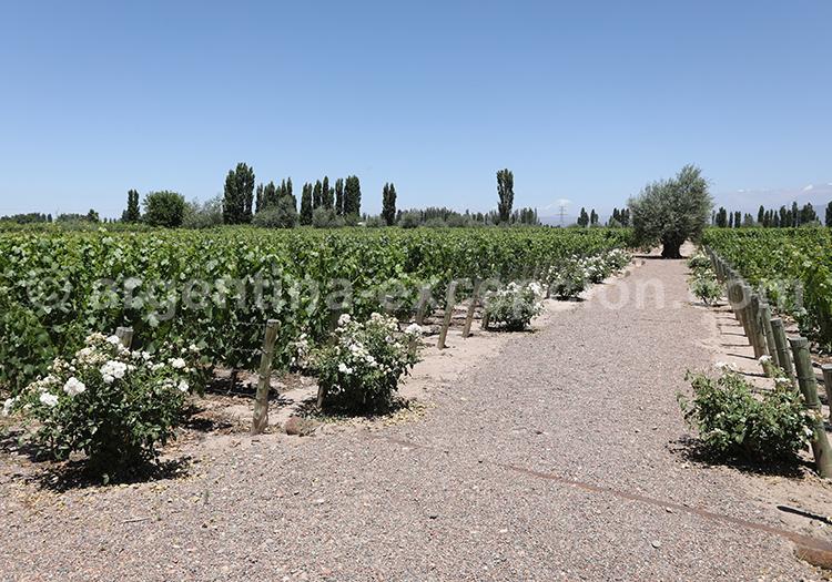 Visiter la région de Mendoza, bodega Matervini avec l'agence de voyage Argentina Excepción