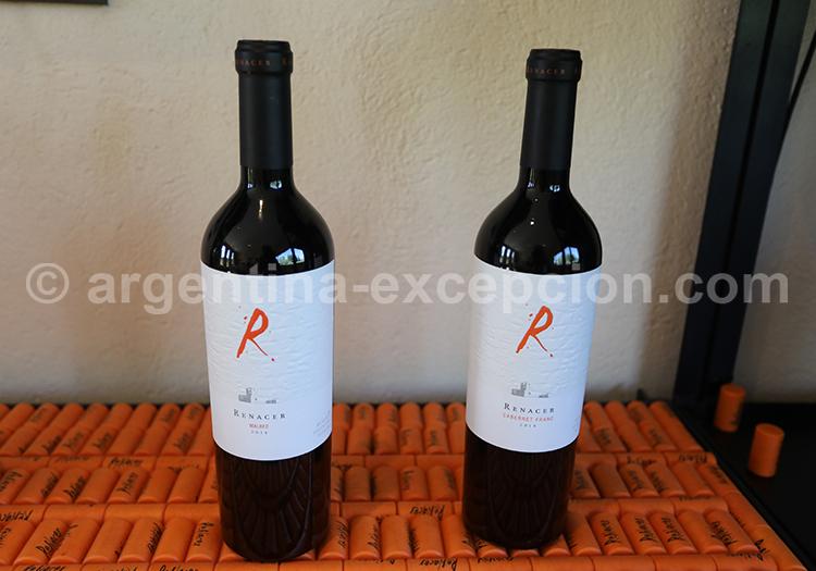 Malbec, bodega Renacer, production de vins argentins avec l'agence de voyage Argentina Excepción