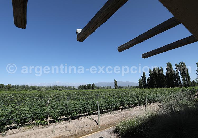 Visiter la bodega Renacer, Luján de Cuyo avec l'agence de voyage Argentina Excepción