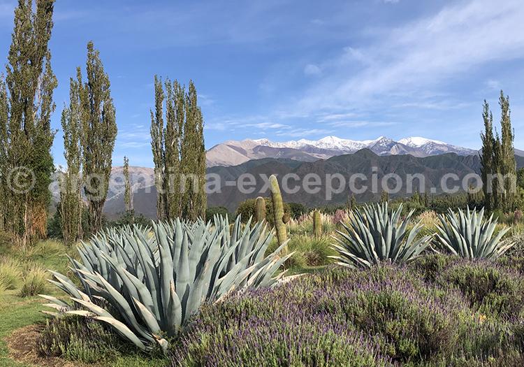 Cafayate, Salta, Argentine avec l'agence de voyage Argentina Excepción
