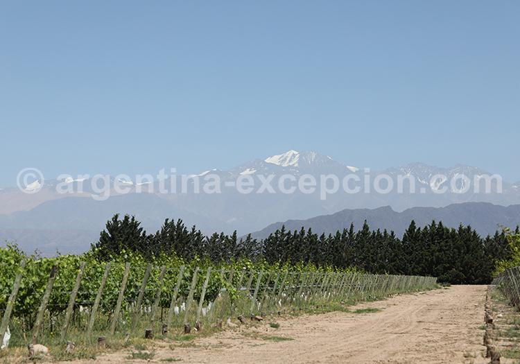 La région du Cuyo, bodega Ruca Malen avec l'agence de voyage Argentina Excepción