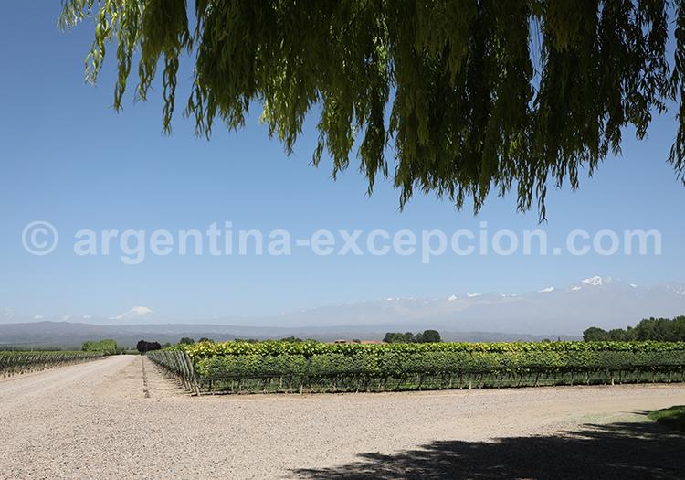 Visiter le domaine Decero, Cuyo, Mendoza avec l'agence de voyage Argentina Excepción