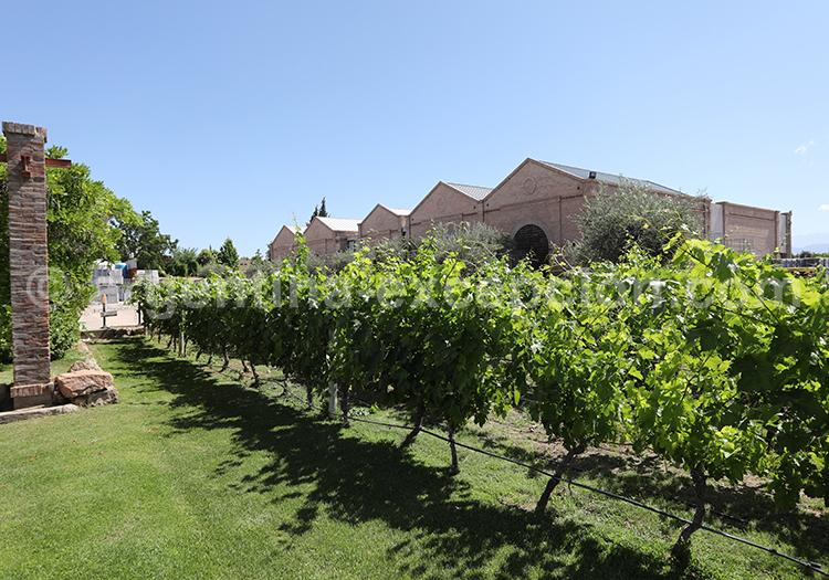 Déguster le vin argentin dans la bodega Alta Vista, Mendoza, Argentine avec l'agence de voyage Argentina Excepción