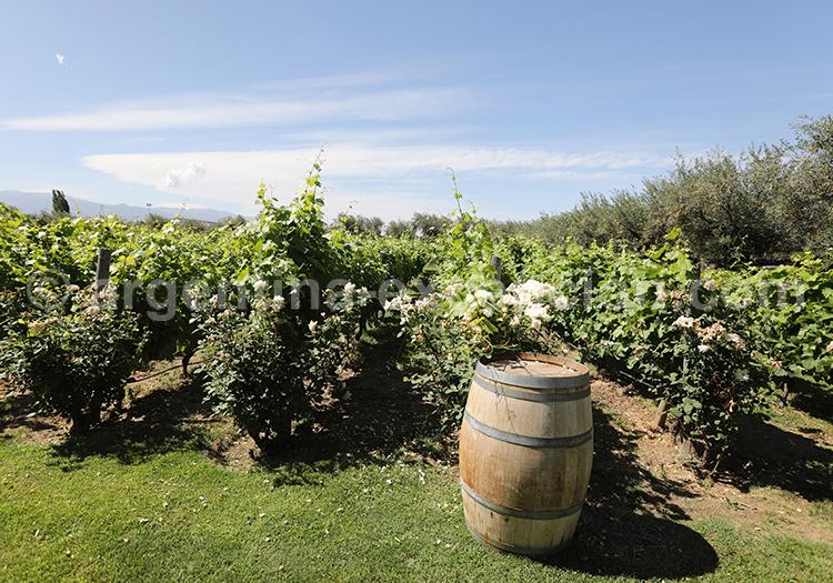 Se balader dans les vignes argentines de la bodega Alta Vista, Mendoza avec l'agence de voyage Argentina Excepción