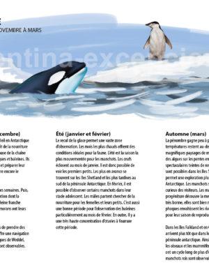 Observer la faune en Antarctique
