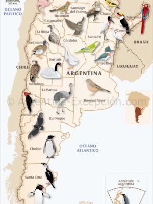 Oiseaux en Argentine