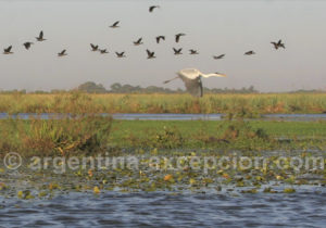 Paysage de la laguna Ibera