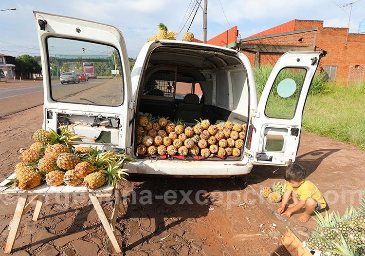 Ananas bio de la province de Misiones