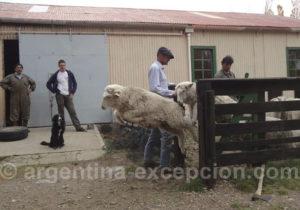 Estancia Santa Thelma, Patagonie