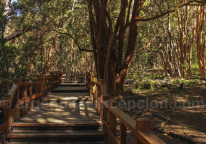 Parc national Los Arrayanes