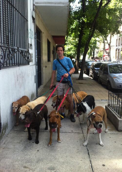 Paseador de perros Buenos Aires